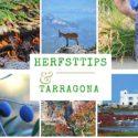 HERFSTDIP? BDT TARRAGONA HERFSTTIPS