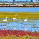 Delta Birding Festival, feest in vogelsparadijs