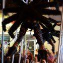 Zwarte Zaterdag, BDT black travelpics