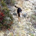 Over LEVEN in Spanje blog #8 Dio kwam, zag & overwon